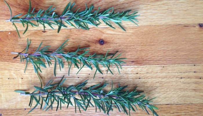 How to Propagate Rosemary in Water | Mother Rising